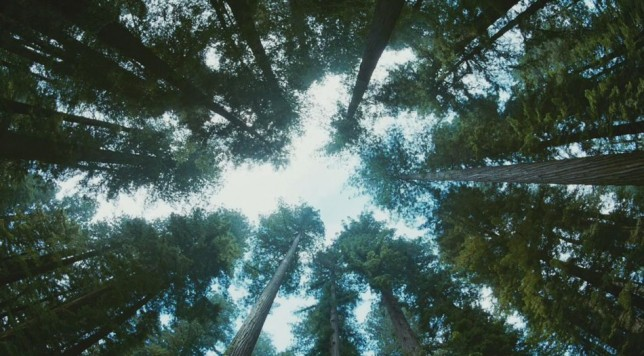 tree-of-life-malick