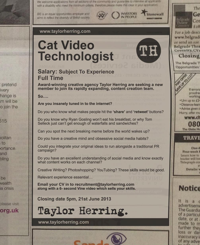 Cat Video Technologist